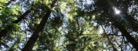 Štúdia: vysadenie bilióna stromov je najrýchlejší a najlacnejší spôsob zvrátenia klimatickej zmeny