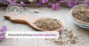 Prínosy koreňa valeriány: ako používať koreň zázraku prírody