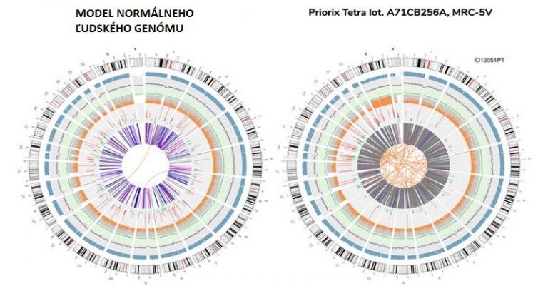 """LEKÁRSKY HOROR: Genetické sekvenovanie bežnej vakcíny zisťuje celý ľudský genóm nedonoseného dieťaťa mužského pohlavia... """"úplný genóm jedinca"""" s abnormálnymi, zmenenými génmi... 560 génov, ktoré majú súvis s rakovinou"""