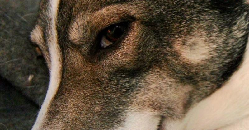 Dokážu psy vycítiť zlého človeka? Čo na to vedci?