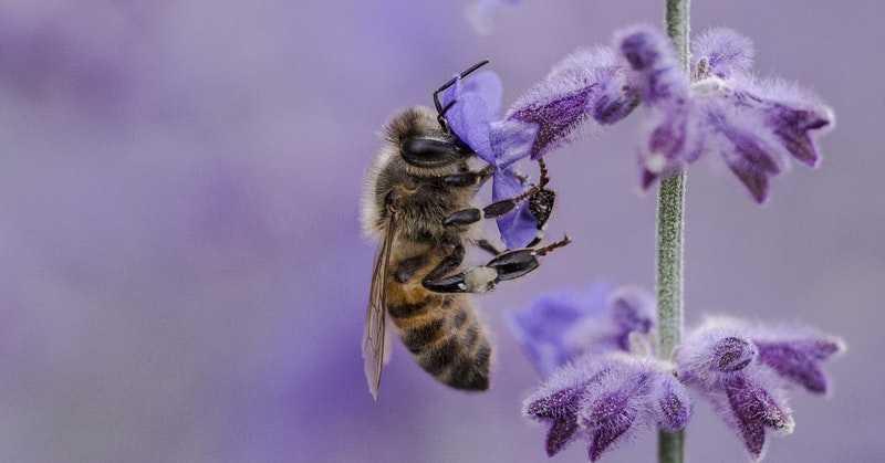 Francúzsko ako prvé vEurópe zakazuje všetkých 5 pesticídov zabíjajúcich včely