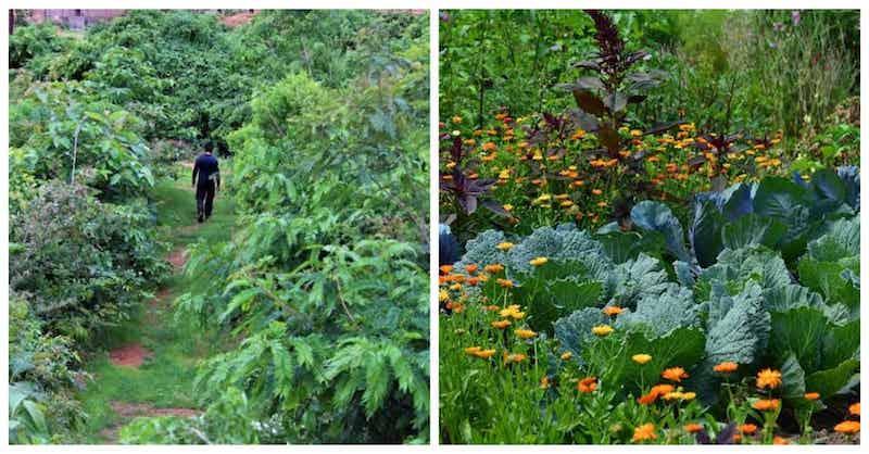 Lesná záhrada s500 jedlými rastlinami si vyžaduje len niekoľko hodín práce mesačne
